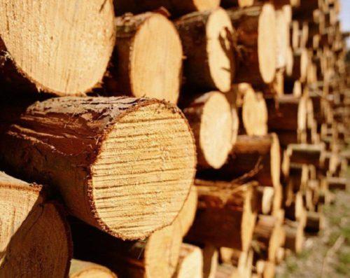 Бизнес-план лесопильного производства (лесопилка) по переработке и заготовке леса