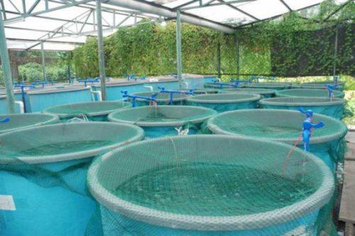 Бизнес-план рыбной фермы: рыбоводческое хозяйство по разведению и выращиванию рыбы в бассейнах