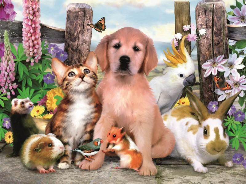 Бизнес план интернет магазина зоотоваров и кормов для животных