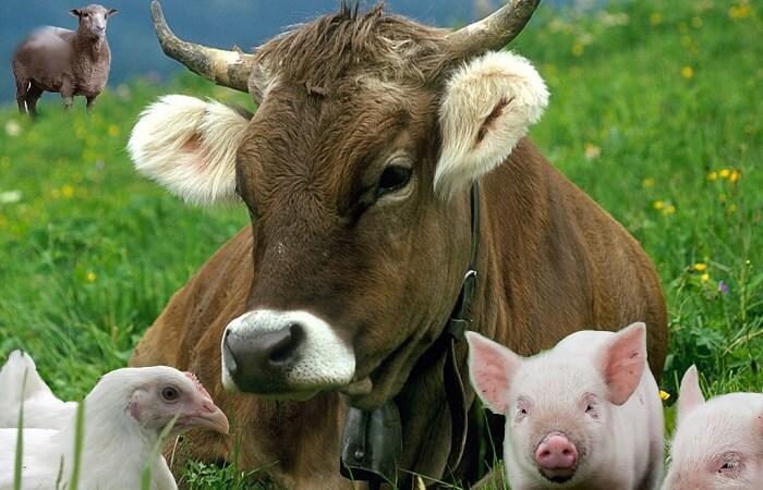Бизнес-план развития животноводческой фермы