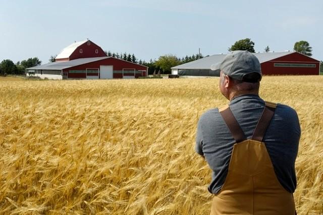 Бизнес-план создания крестьянско-фермерского хозяйства