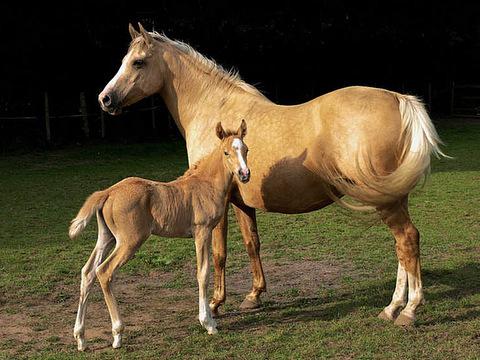 Бизнес-план мясного коневодства по разведению лошадей