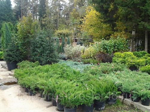 Бизнес-план питомника древесных растений и деревьев