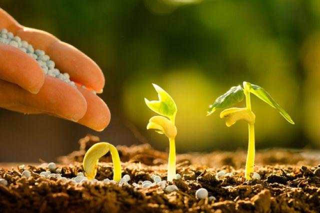 Бизнес-план производства удобрений и биогумуса