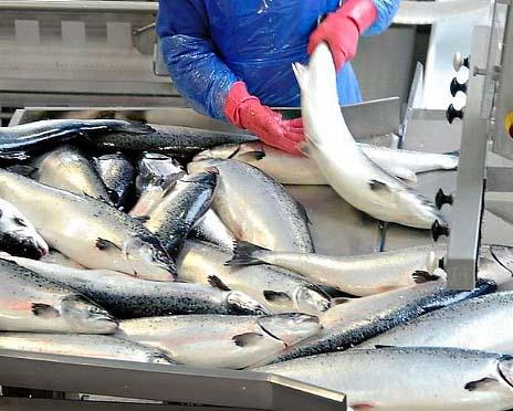 Бизнес-план рыбного цеха по переработке рыбы и производства рыбных консервов
