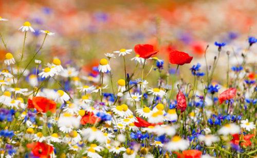 Бизнес-план теплицы по выращиванию цветов: роз и разведение комнатных цветов - на продажу