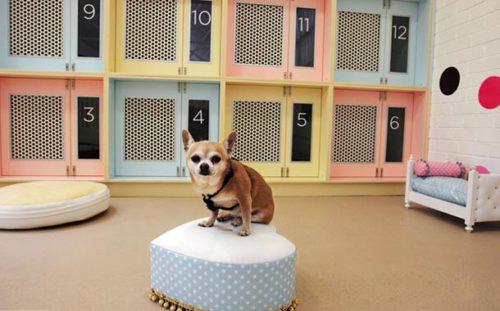 Бизнес-план открытия гостиницы для животных с расчетами