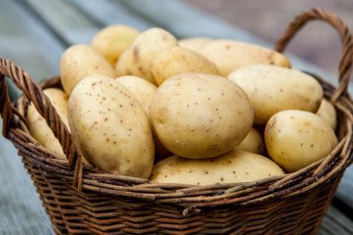 Бизнес-план картофельного хозяйства по выращиванию картофеля на реализацию