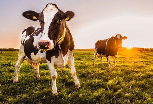 Бизнес-план фермы КРС по выращиванию и разведению мясного скотоводства на мясо с расчетами