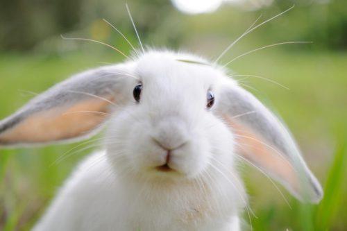 Бизнес-план кроличьей фермы по разведению и выращиванию кроликов с расчетами (кролиководство)